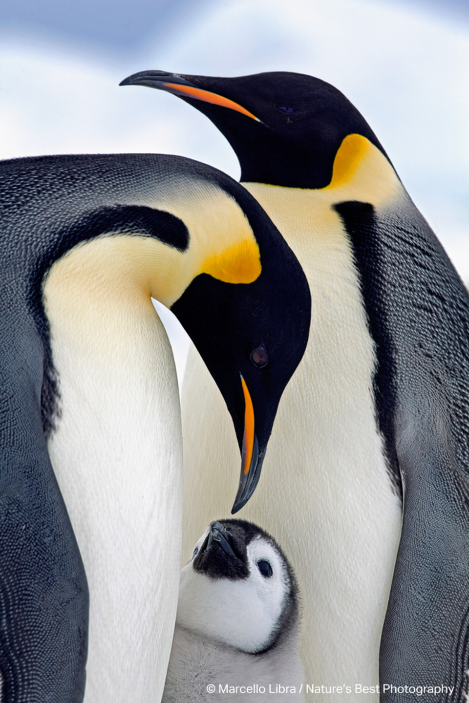 Epson Sponsors 20th Anniversary Nature's Best Photography